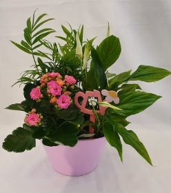 Indoor Planter Pink
