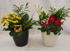 Indoor Planter   Florists Choice